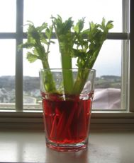 Celery in red water