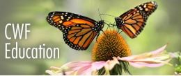 Build a wild space for monarchs with your classroom!