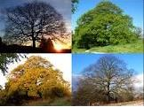 Tree in different seasons2