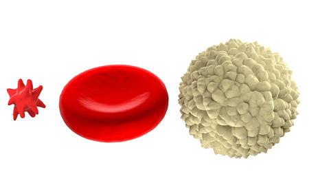 41800307 - main blood cells in scale isolated on white background
