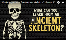 What can you learn from ancient skeletons? – TED-Ed