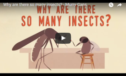 Why are there so many insects? – TED Ed – Murry Gans