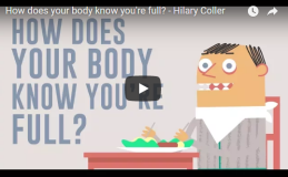 How does your body know you're full? TED-Ed
