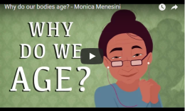 Why do our bodies age? – TED-Ed