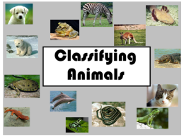 ANIMALS AND CRITICAL THINKING IN GRADE2