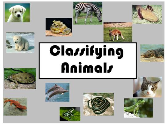 classification | STAO Blog