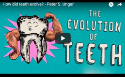 How did teeth evolve? – TED- Ed by Peter S.Ungar