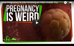 How Pregnancy Is Like Growing an Alien Inside You