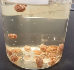 Sewer Lice – Flinn ScientificCanada