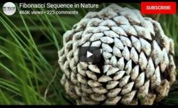 Fibonacci Sequence inNature