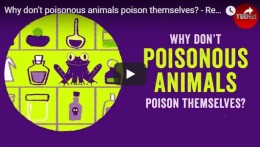 Why don't poisonous animals poison themselves? – TED Ed by Rebecca D.Tarvin