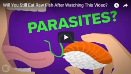 Will You Still Eat Raw Fish After Watching ThisVideo?