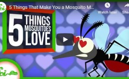 5 Things That Make You a Mosquito Magnet –YouTube