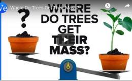 Where Do Trees Get Their Mass? –Veritassium