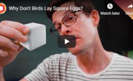 Why Don't Birds Lay SquareEggs?
