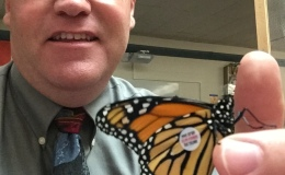 Monarch Butterfly Tagging  – submitted by KentCheesman
