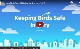 KEEPING BIRDS SAFE INQUIRY – by Laura Collins (STAO Connex Inquiry Series)
