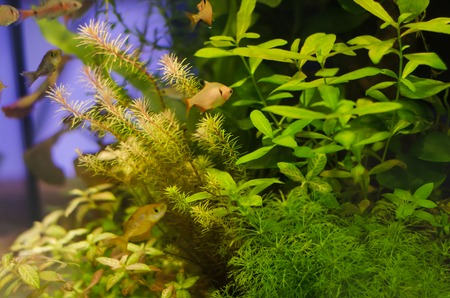 34418837 - planted aquarium with fish, tropical plant underwater for decoration