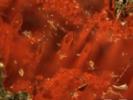 World's Oldest Microfossils inCanada