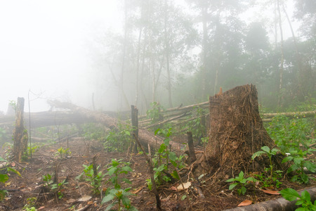 44292313 - increse deforestation for cultivate, lao
