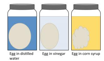 eggmosis